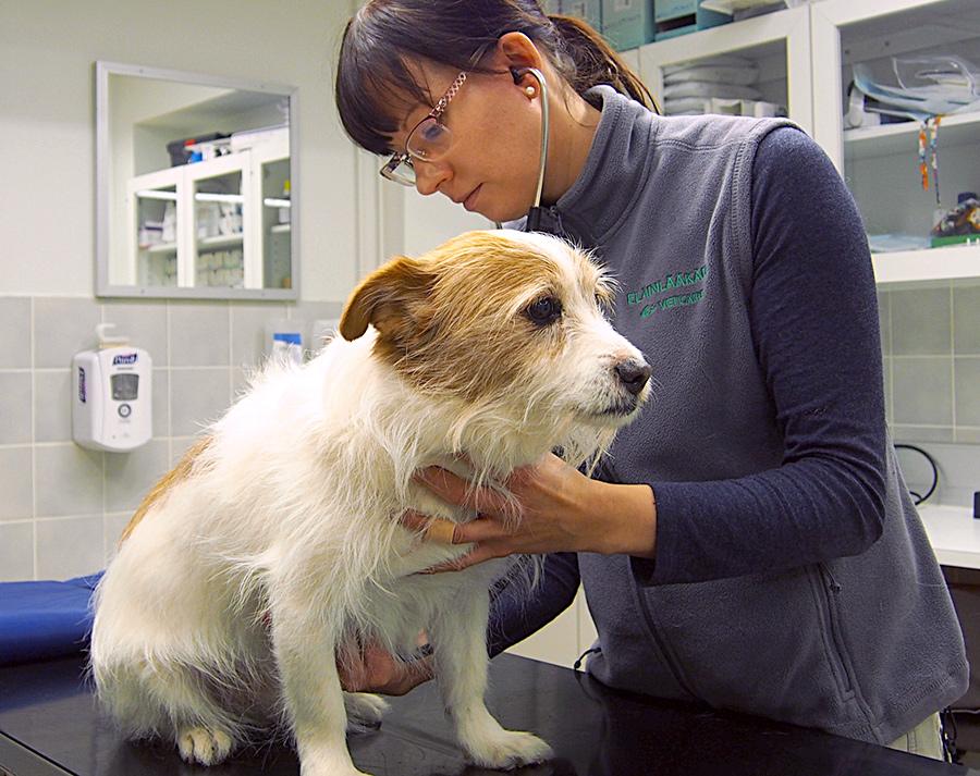 Lemmikkieläinpassi ja mikrosiru