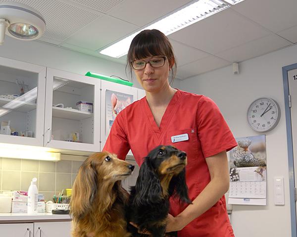 Eläinlääkäri Opinnot